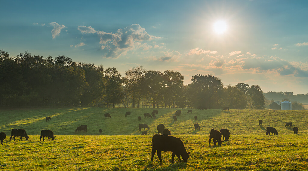 Dartcor Corporate Food Service - image of field with grazing cattle